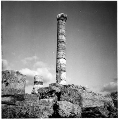 Poséidonia-Paestum, temple de la Paix, colonne de façade.